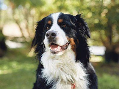 mcla-pet-dog-profile-image